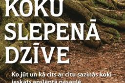 Koku slepenā dzīve. Ko jūt un kā cits ar citu sazinās koki – ieskats apslēptā pasaulē