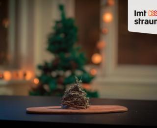 Video: Radi pats īpašu svētku eglīti