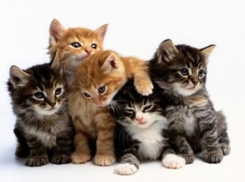 Kādi cilvēki par savu mīluli parasti izvēlas kaķi