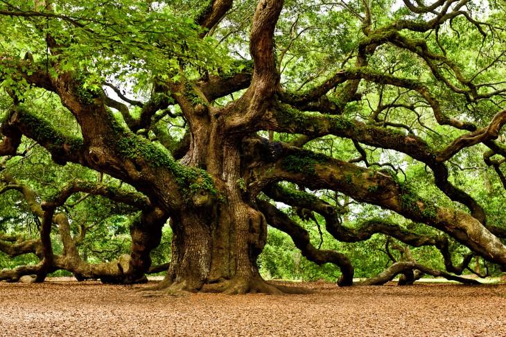 Koku atveseļojošā enerģētika
