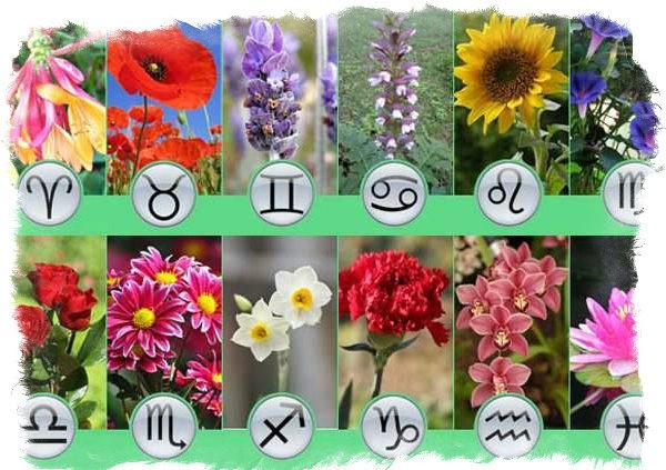 Ziedu horoskops