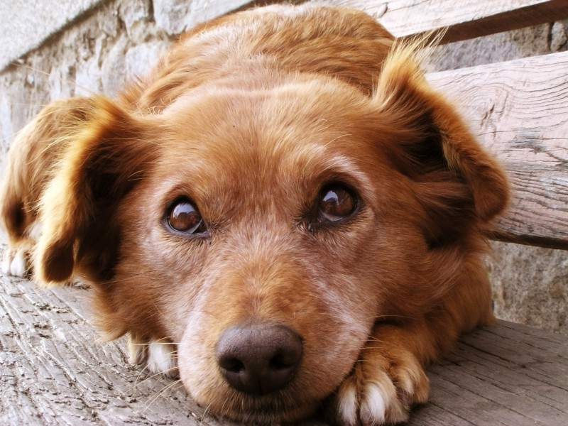 Suņu saslimšana ir radījusi sabiedrībā trauksmi un vēlmi iesaistīties. Iesaisties arī tu