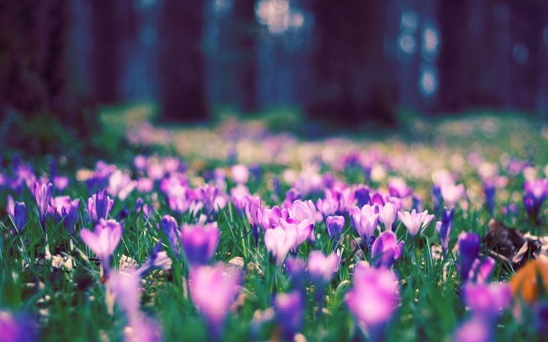 Tava vārda skaidrojums un ietekme uz tavu likteni. 22. marts - Tamāra, Dziedra, Gabriela, Gabriels