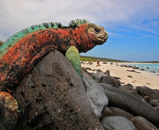 Aizraujošās Galapagu salas: bruņurupuči, iguānas, pingvīni vienuviet