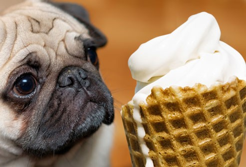 8 produkti no mūsu virtuves, kas ir inde mājdzīvniekiem